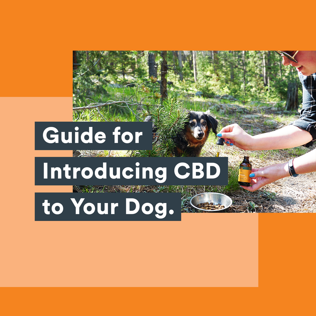Bluebird Botanicals Guide For Introducing CBD To Your Dog