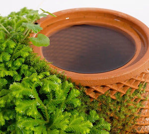 planter with sellaginella and moss growing on the surface