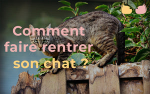 Comment faire rentrer son chat ?
