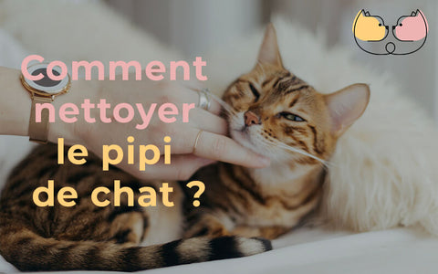 comment nettoyer le pipi de chat