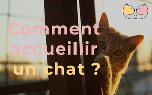 comment accueillir un chat