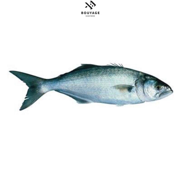 Bluefish - سمك مياس