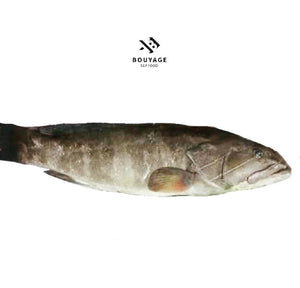 Grouper 111 Whole Fish - سمك وقار 111 منظف