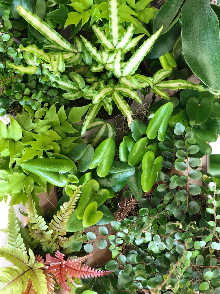 Monthly Plant Subscription - A Year of Specialty Plants