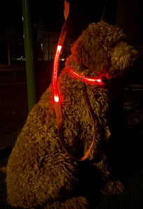 LED Dog Collar + Leash Bundle - Great for Night Walks!