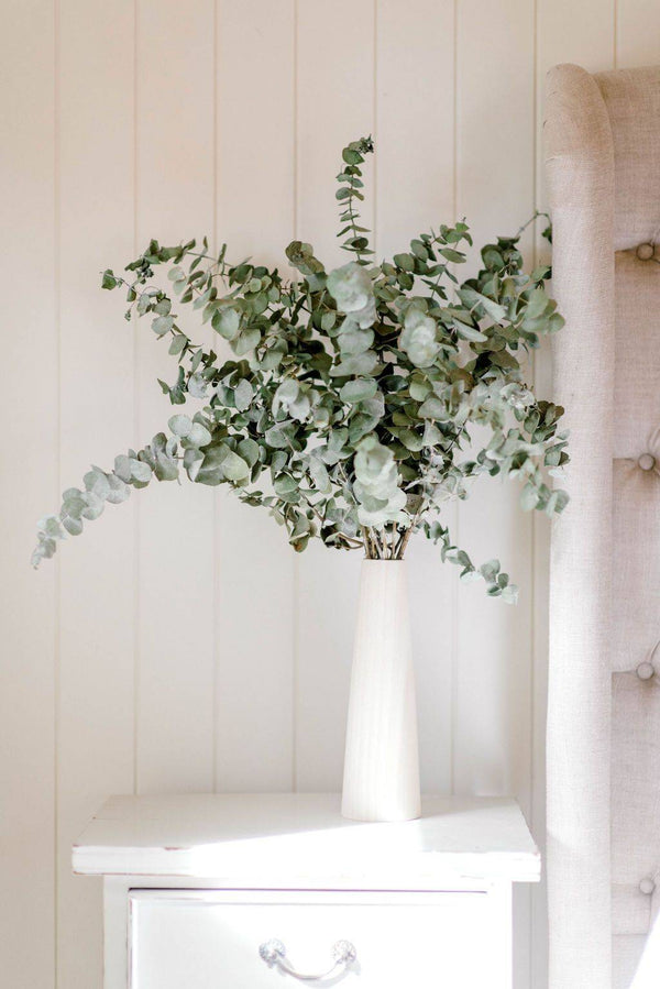 Dried Blooms - Dried Eucalyptus