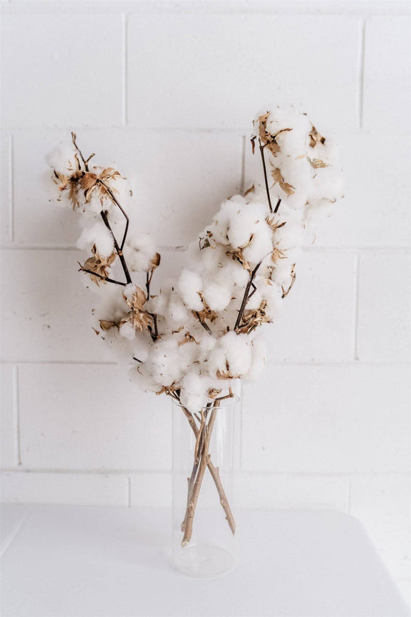 Dried Blooms - Cotton Stems