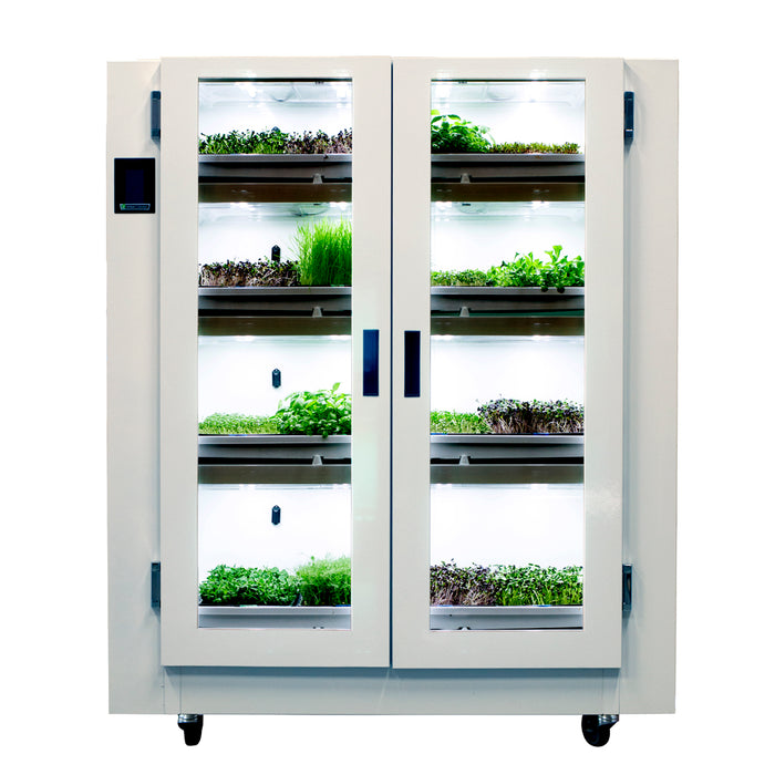 Nursery | BC Northern Lights / Urban Cultivator