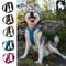 Truelove Sport Nylon Reflective No Pull Dog Harness