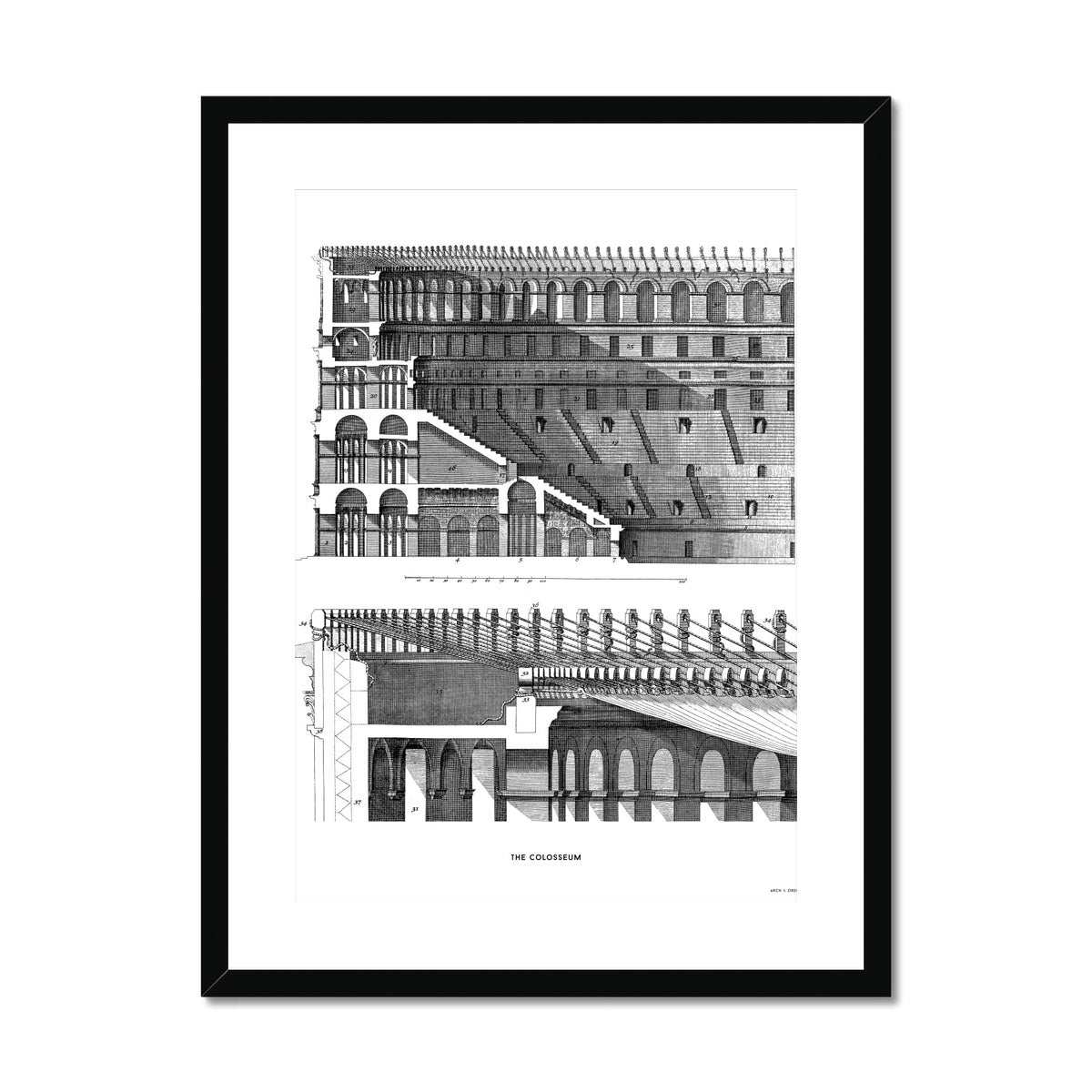 The Colosseum - Section Detail - White -  Framed & Mounted Print
