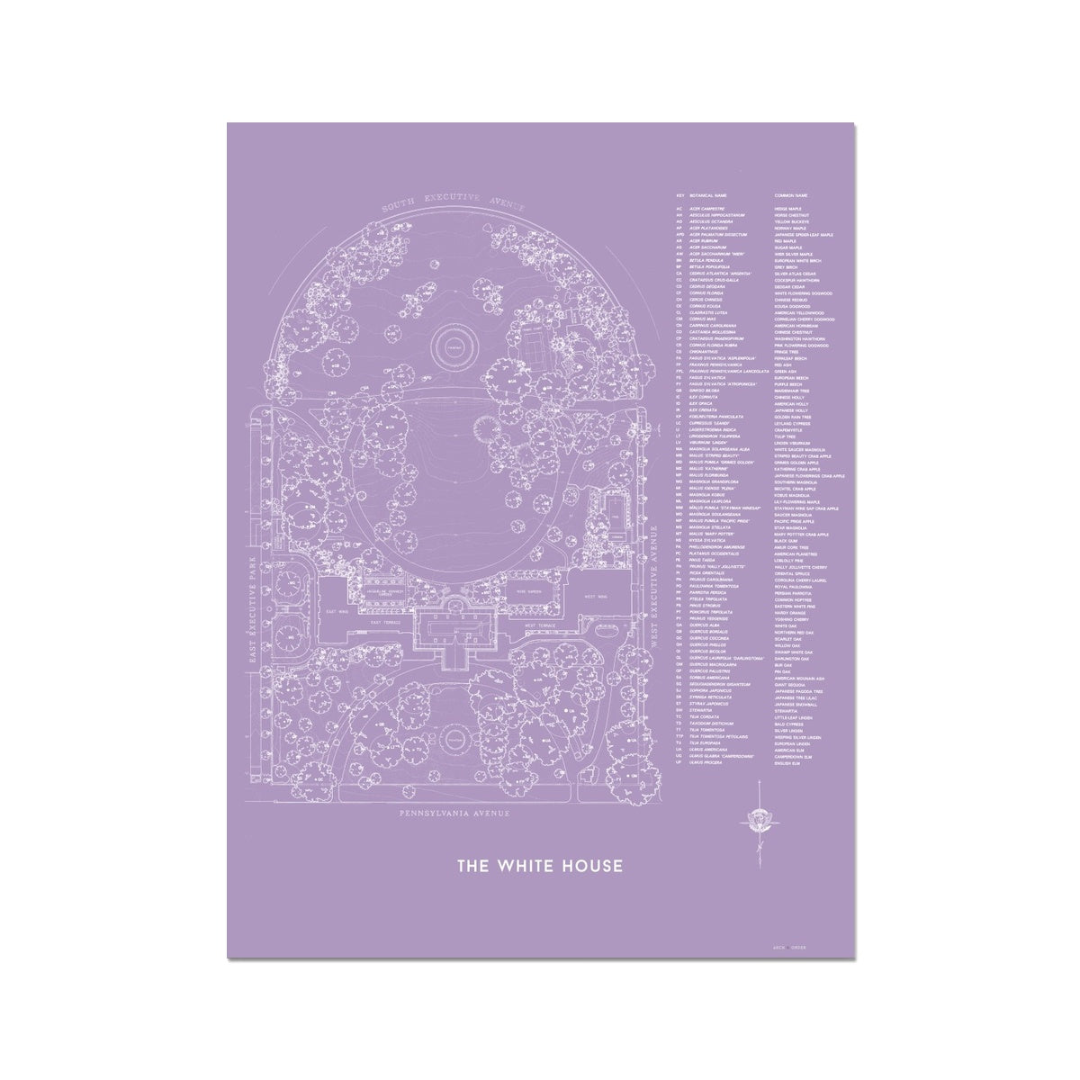 The White House Landscaping Plan - Lavender -  Etching Paper Print