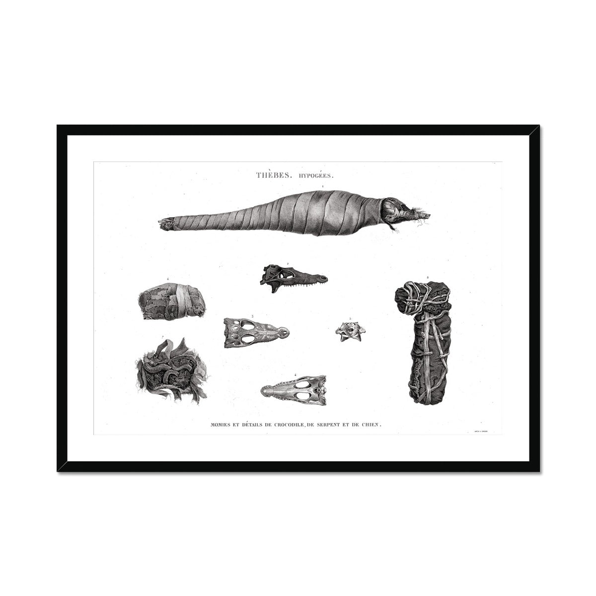 Crocodile, Snake, and Dog Mummies - Egypt -  Framed & Mounted Print
