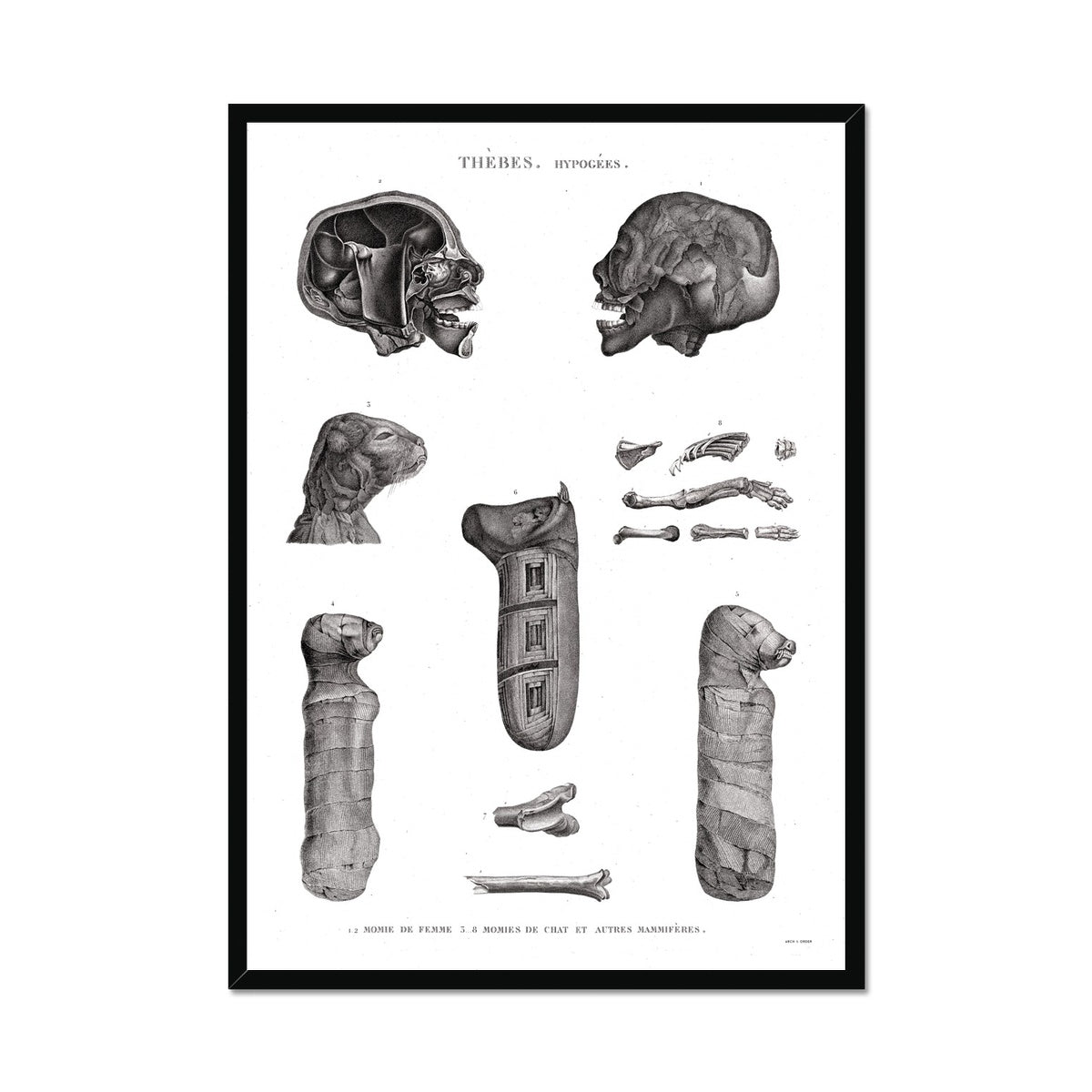 Mammals and Cat Mummies - Egypt -  Framed Print