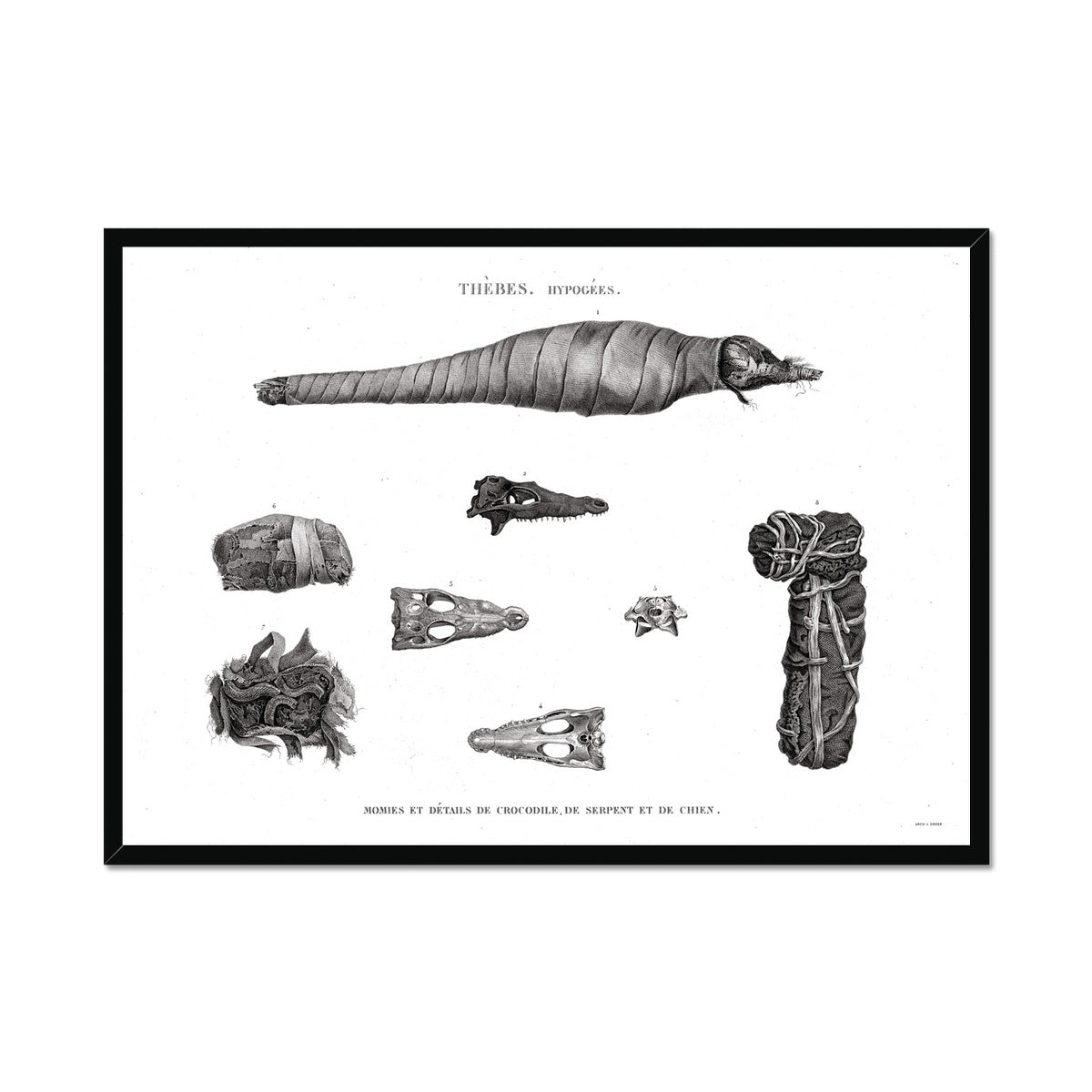 Crocodile, Snake, and Dog Mummies - Egypt -  Framed Print