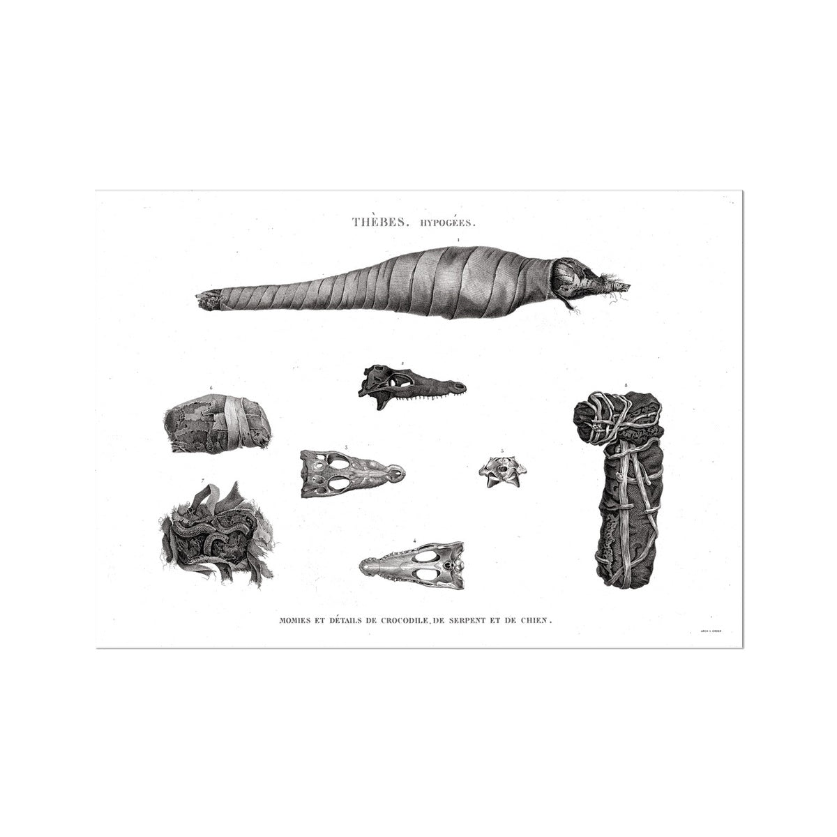 Crocodile, Snake, and Dog Mummies - Egypt -  Etching Paper Print