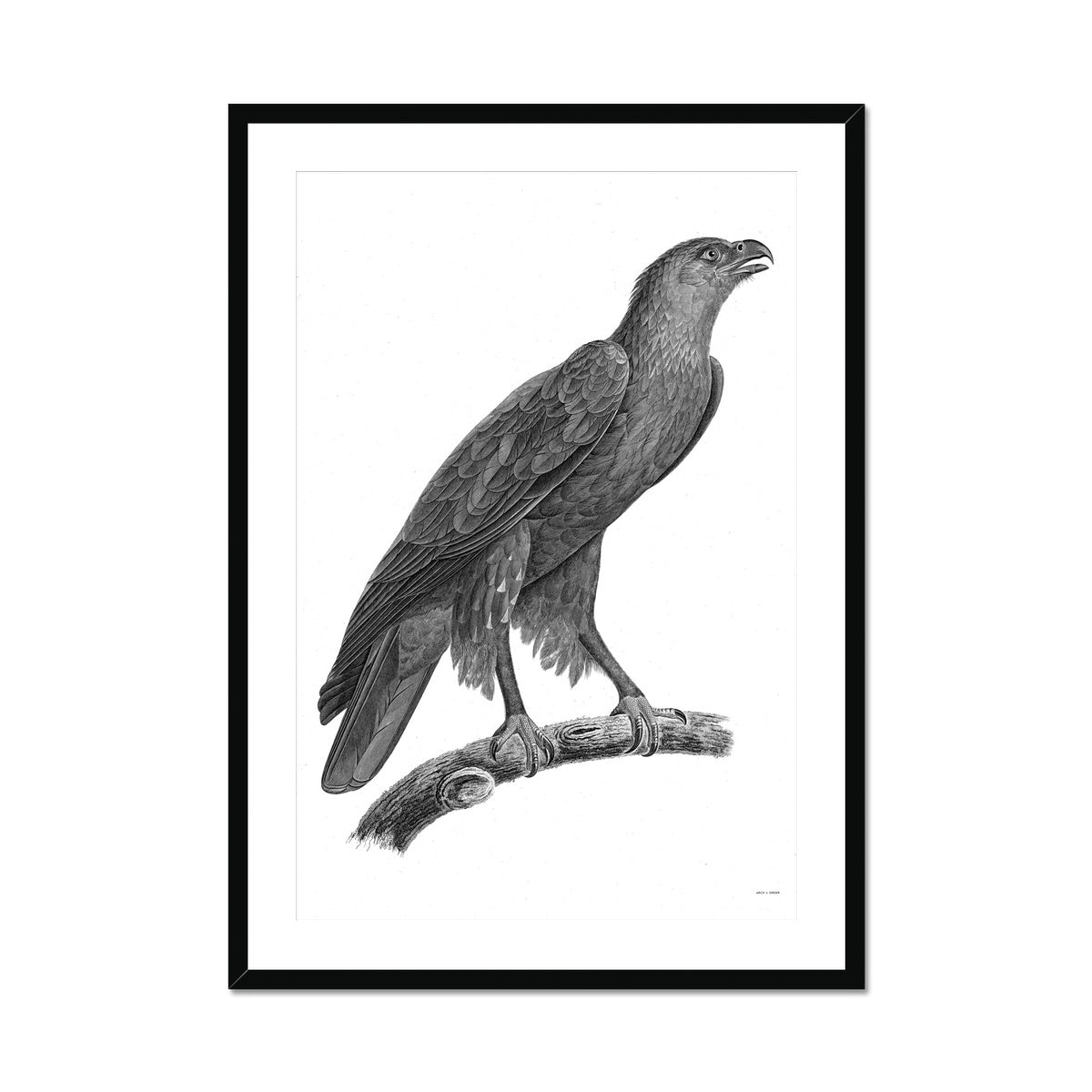 Birds 2 - Egyptian Zoology -  Framed & Mounted Print