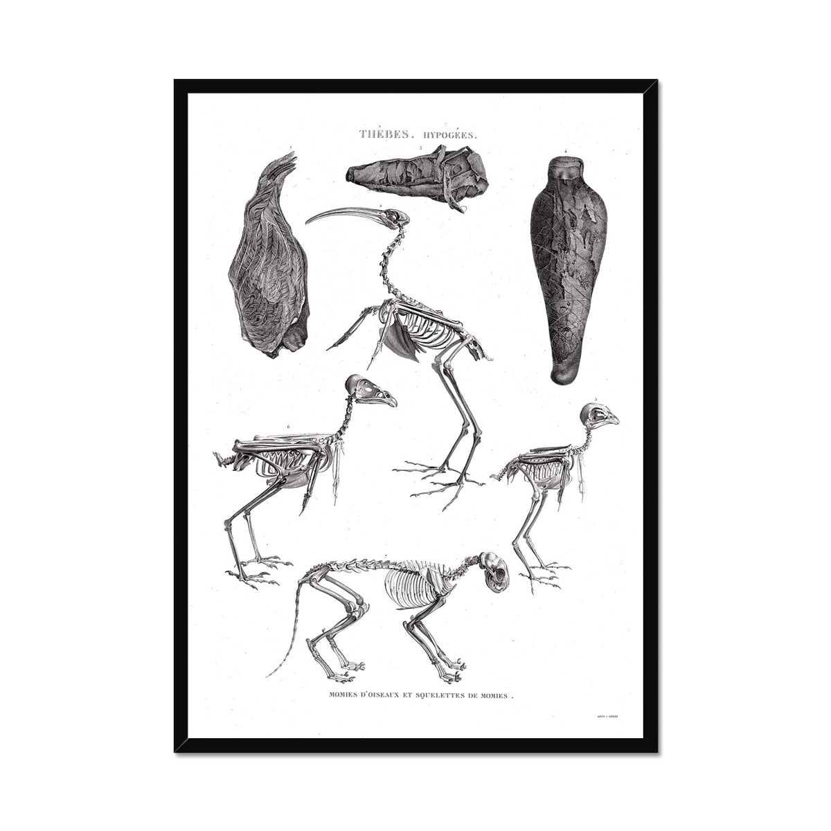 Bird Mummies - Egypt -  Framed Print