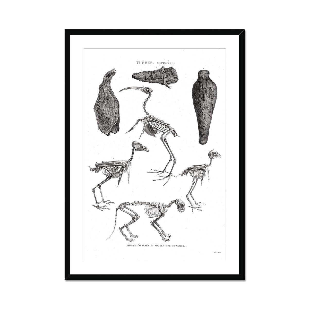 Bird Mummies - Egypt -  Framed & Mounted Print