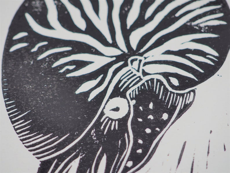 "Illustration linogravure ""Nautile"""