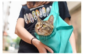 Portable Cat Carrier Travel Bag Cat Car Seat B732