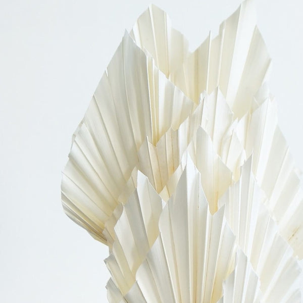 White Palm Spears