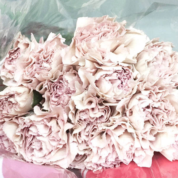 Carnations - Standard - You Floral