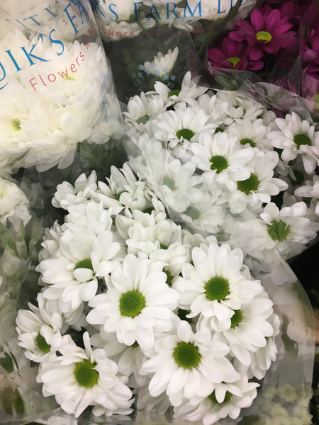 Spray Mums