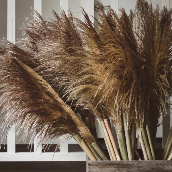 Pampas Grass - You Floral