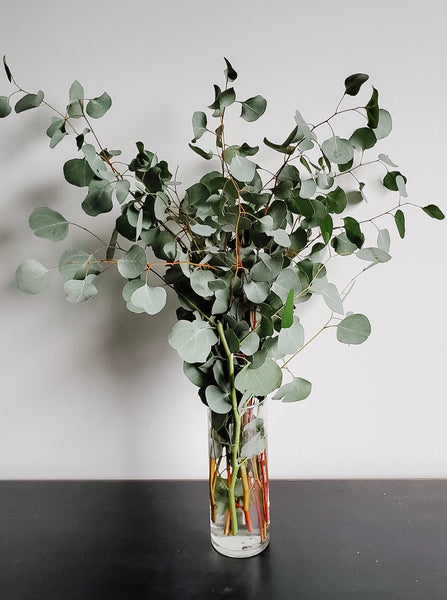 Eucalyptus - Silver Dollar - You Floral