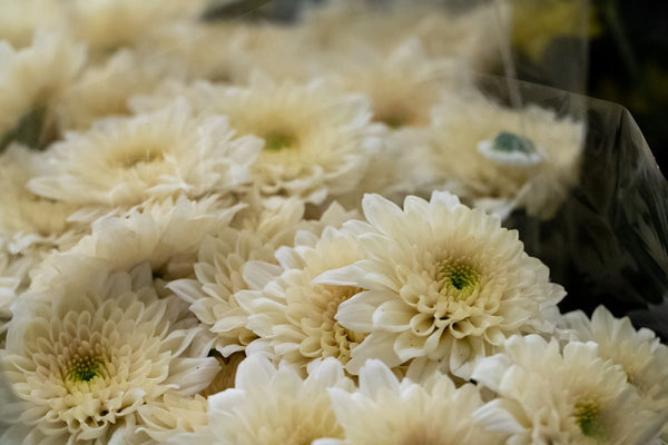 Spray Mums - You Floral