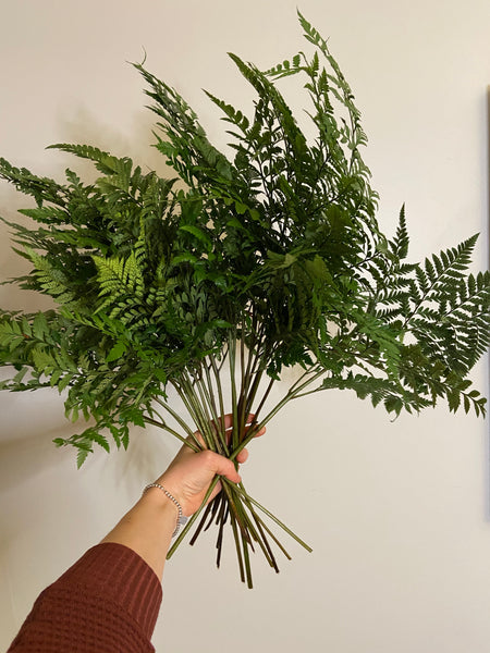 Leatherleaf Fern - You Floral