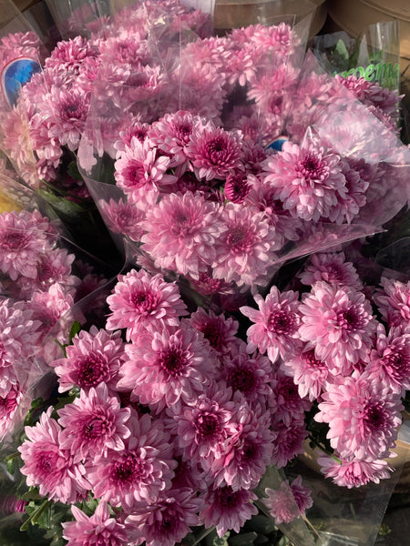 Mums - You Floral