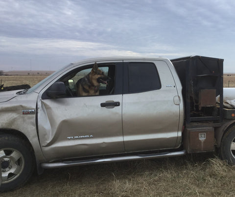 farm dog in ranch truck in pasture