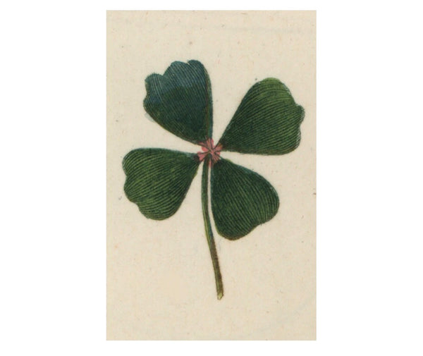 Clover Postcards (pack of 10)