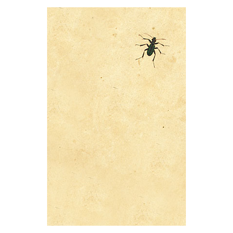 Dark Bug Postcards (pack of 10)