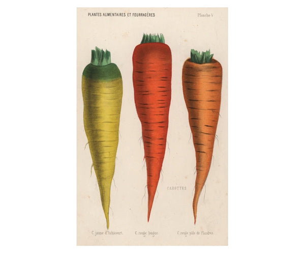 Carrottes Postcards (pack of 10)