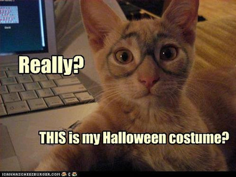 Bad Kitty Costume