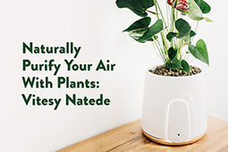 Naturally Purify Your Air With Plants: Vitesy Natede