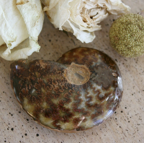 Ammonite Fossil, 57 grams