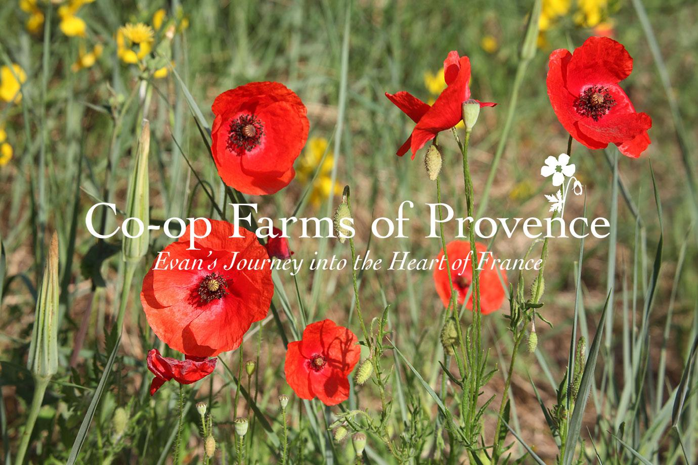 Co-op Farms of Provence ~ Evan's Journey into the Heart of France