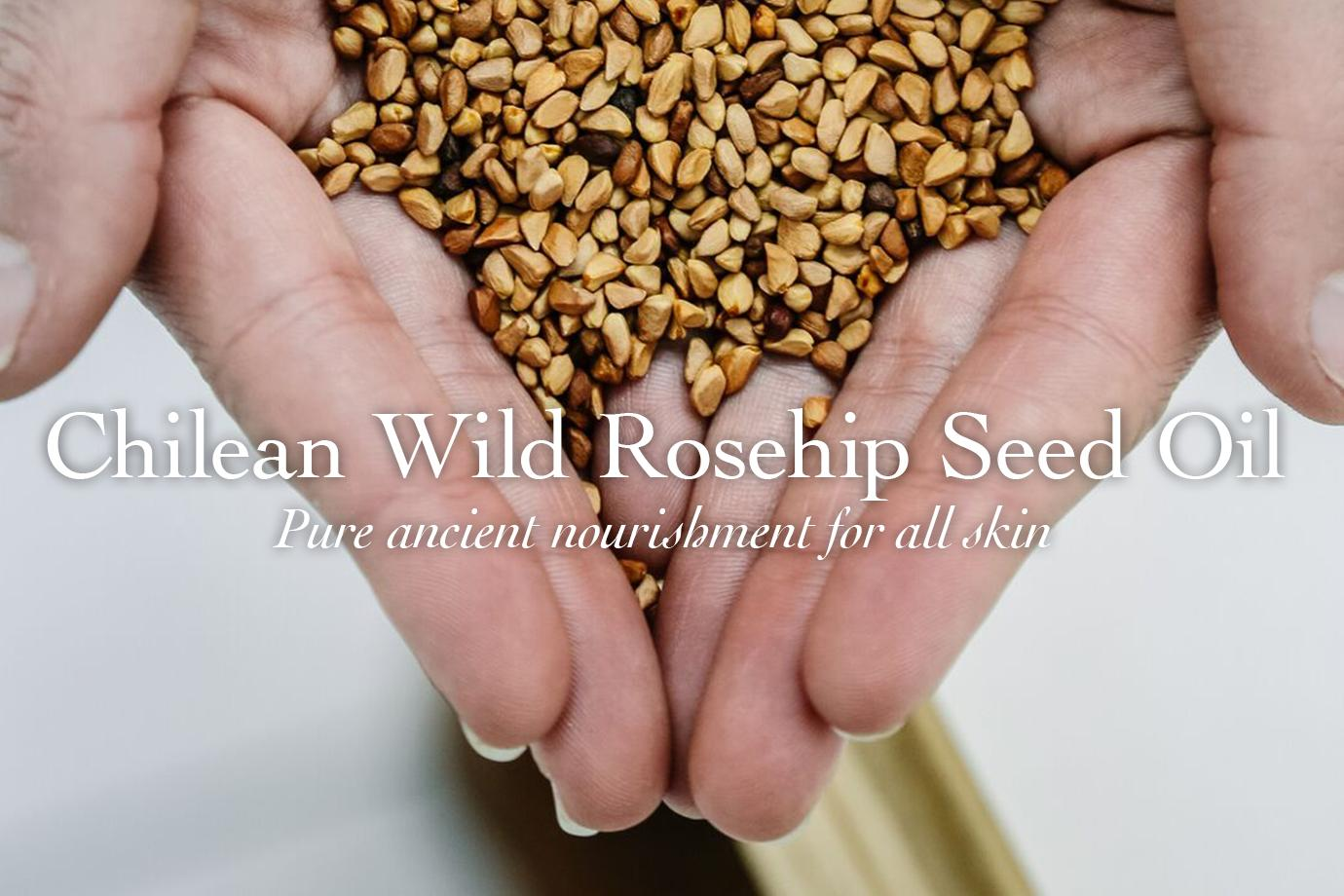 Discovering Chilean Wild Rosehip Seed Oil - evanhealy