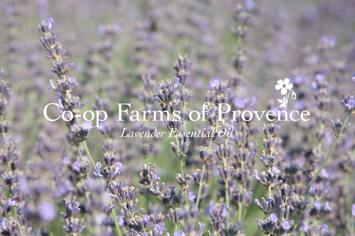 Co-op Farms of Provence ~ Lavender Essential Oil