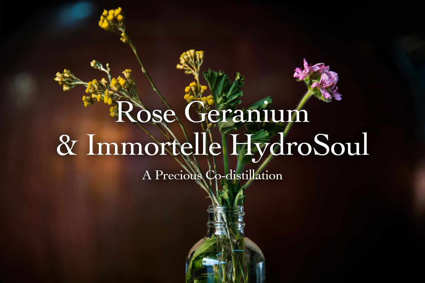 Rose Geranium & Immortelle HydroSoul ~ A Precious Co-Distillation
