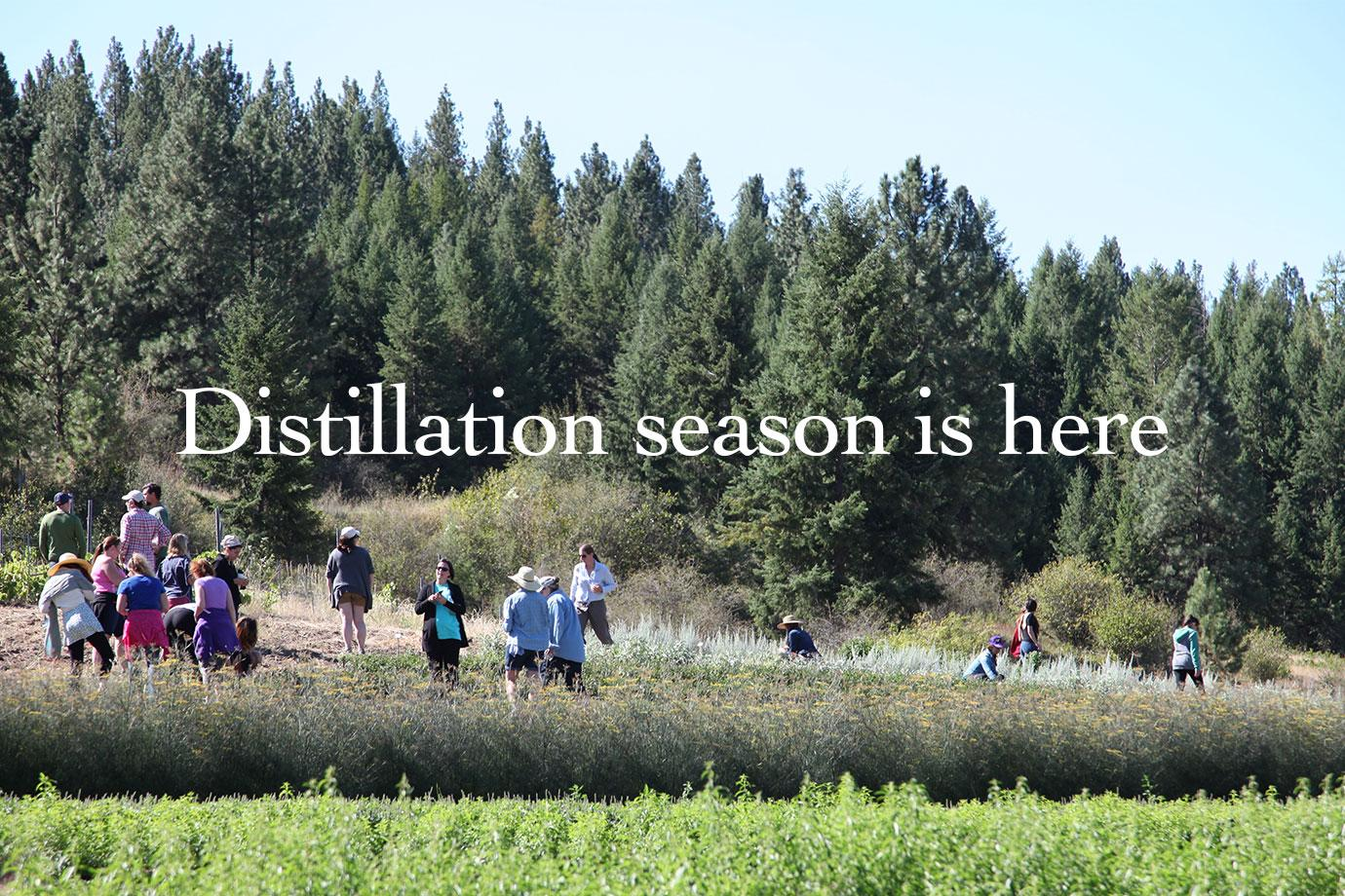 Distillation season is here