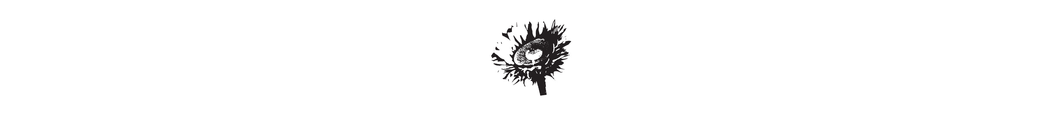 Illustrations for wildflowers