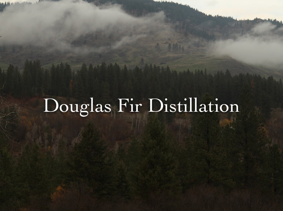 Douglas Fir Distillation