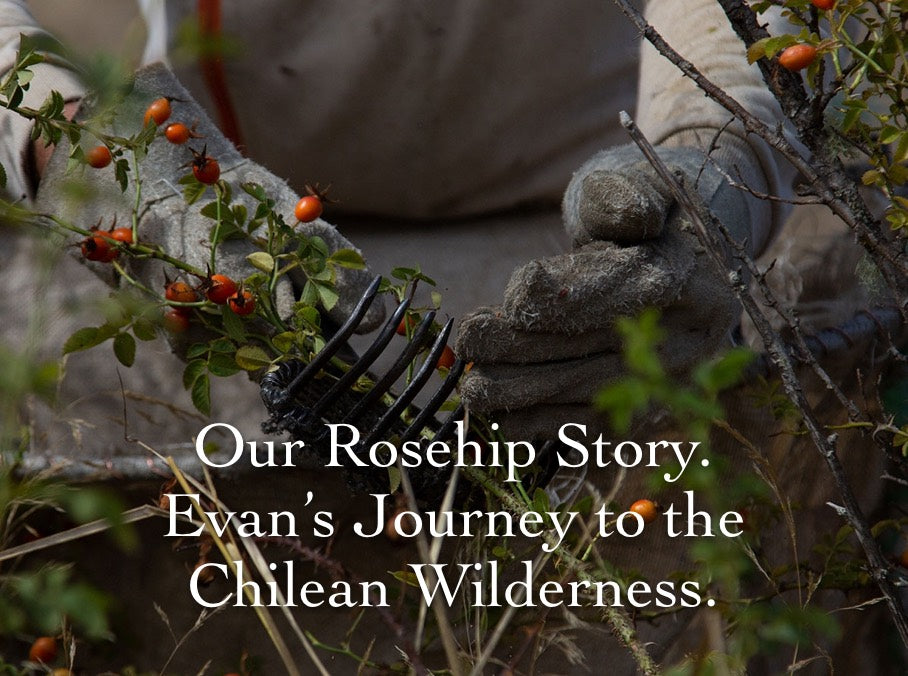 Our Rosehip Story. Evan's Journey to the Chilean Wilderness