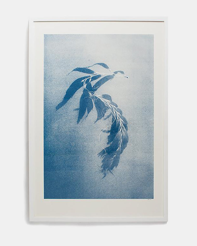 Will Adler 'Seaweed' Print, edition of 100