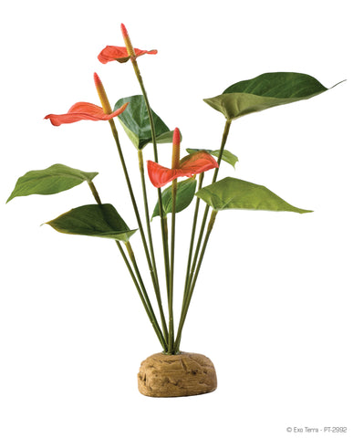 Exo Terra rainforest plants Anthurium bush