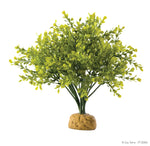 Exo Terra rainforest plants Boxwood bush